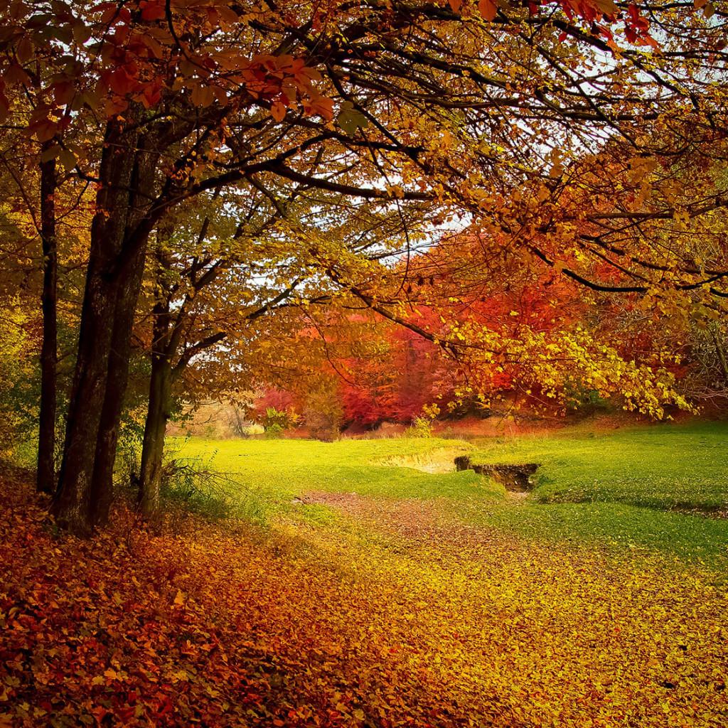 Efterårsferie i hytte